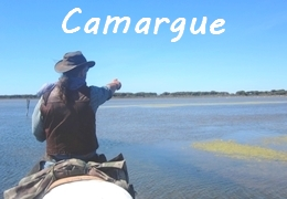 Horse riding Camargue