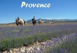 Horseback riding in Provence
