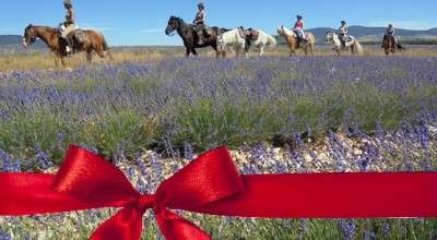 Horse riding holiday gift voucher