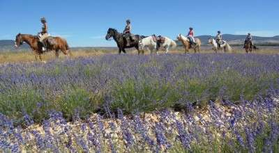 Provence rides offers