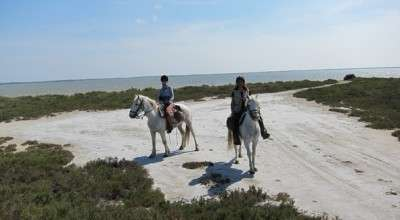 camargue horse riding holiday