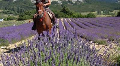 horse riding trip in provence