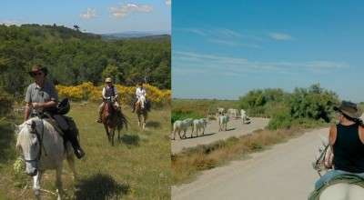 discover the provence on horseback