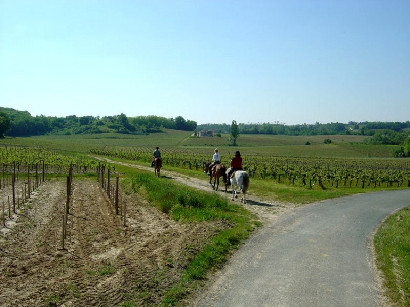 Horse riding trail ride in France