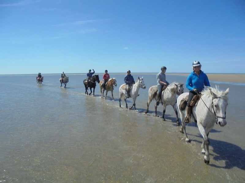 Horse riding holidays in Camargue
