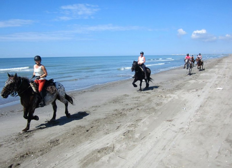 equestrian holiday in Camargue