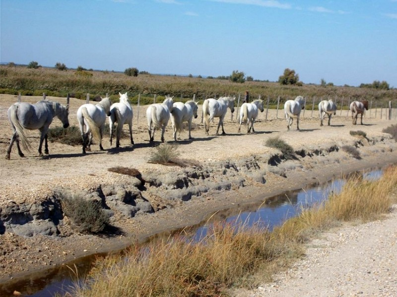 equestrian stay in Camargue