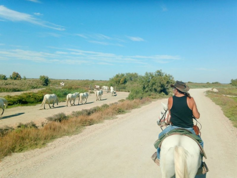 equestrian activity in Camargue