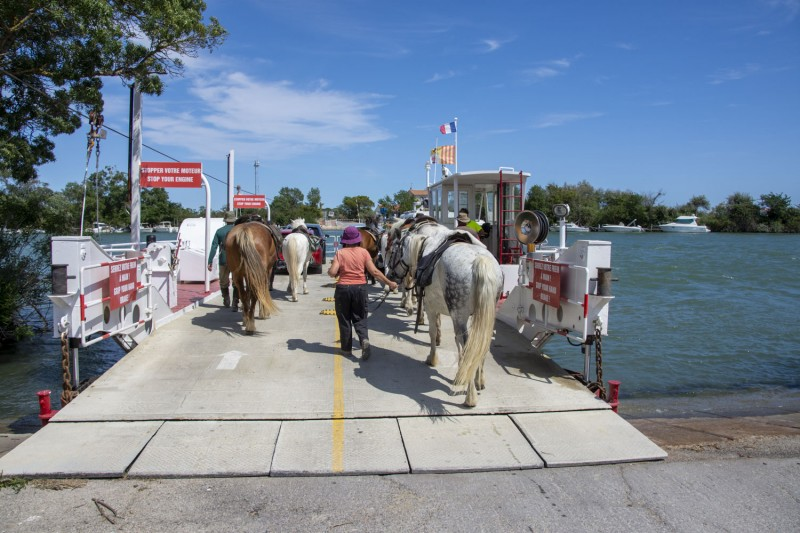horse riding trail ride in Camargue
