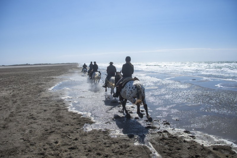 horse trail riding in Camargue