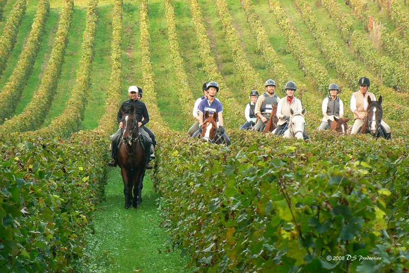 South of France horse riding