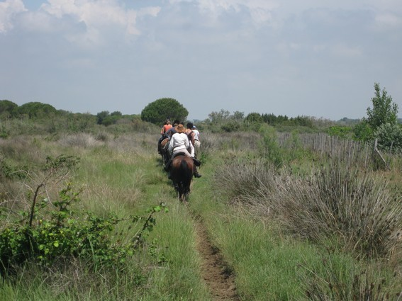 horseback trail ride in camargue