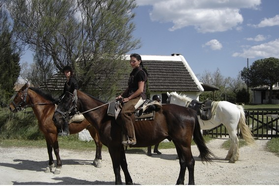 camargue horseback riding