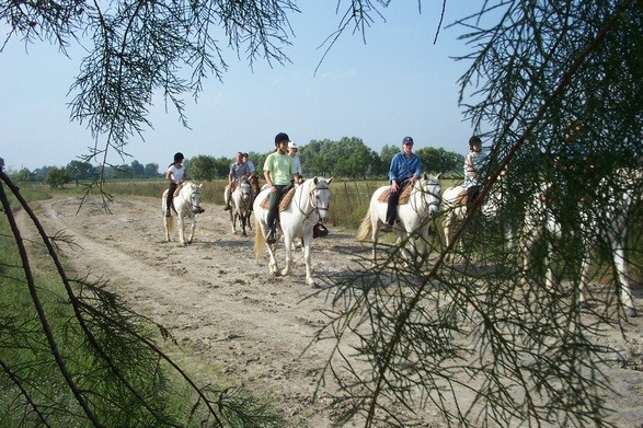 camargue horseback riding holiday