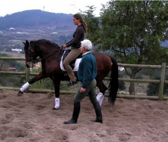 stage equitation portugaise